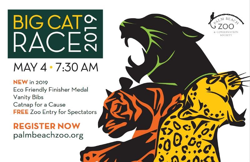 cat-race-1